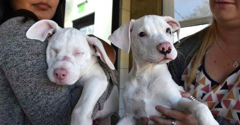 Ce chiot sourd et aveugle et son «chien guide» cherchent une maison ensemble