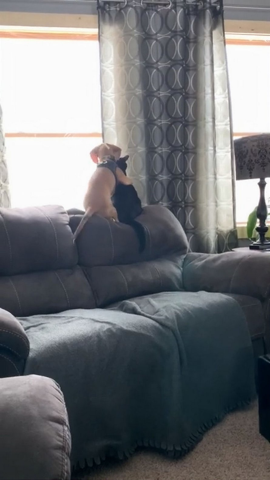 Cette vidéo virale montre le moment adorable où un chiot fait un câlin à un chaton