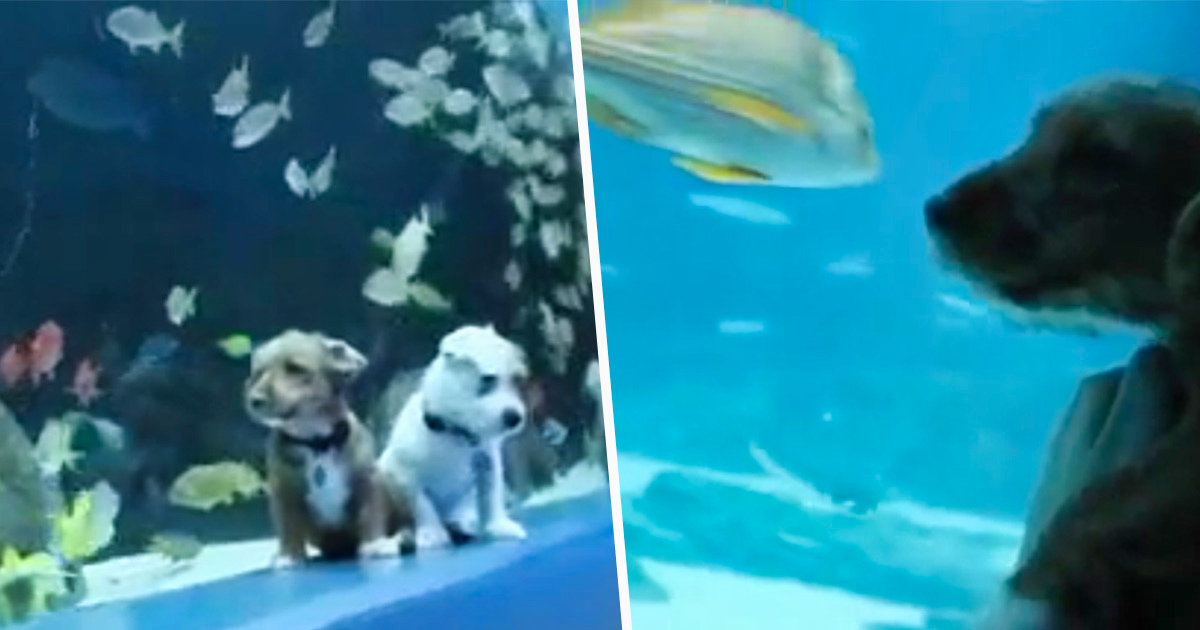 Ces chiots ont visité l'aquarium de Géorgie et y ont rencontré des poissons pendant sa fermeture au public