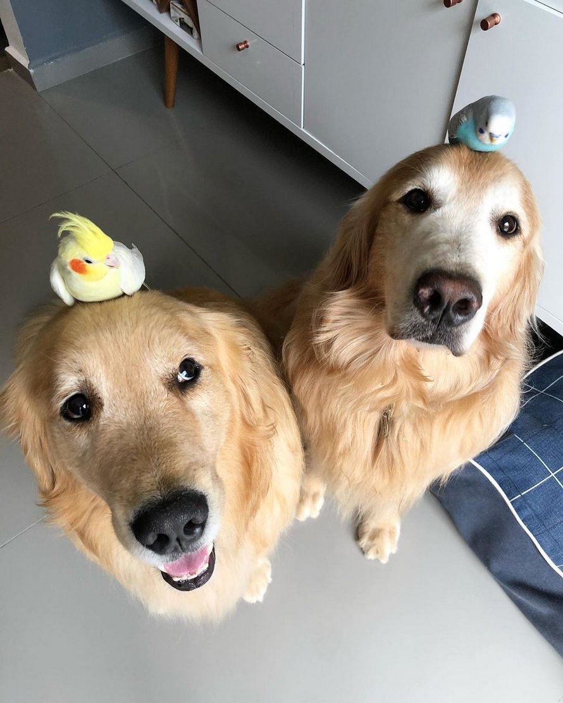 Deux chiens, 8 oiseaux et un hamster sont les amis les plus improbables de tous les temps