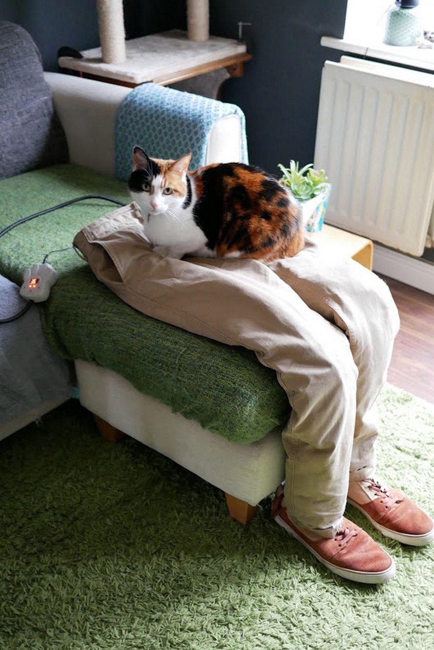 Un couple a dupé leur chatte super collante en créant de faux genoux pour qu'elle puisse s'y asseoir
