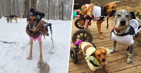 Une femme a adopté 6 chiens ayant des besoins particuliers et maintenant, ils vivent tous une vie heureuse