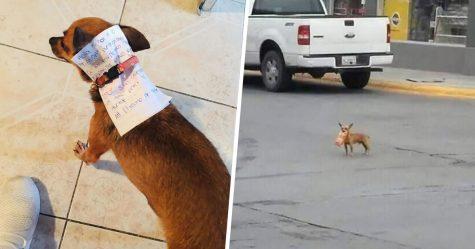 Ce gars en quarantaine a envoyé son chien en mission pour acheter des Cheetos et il a réussi