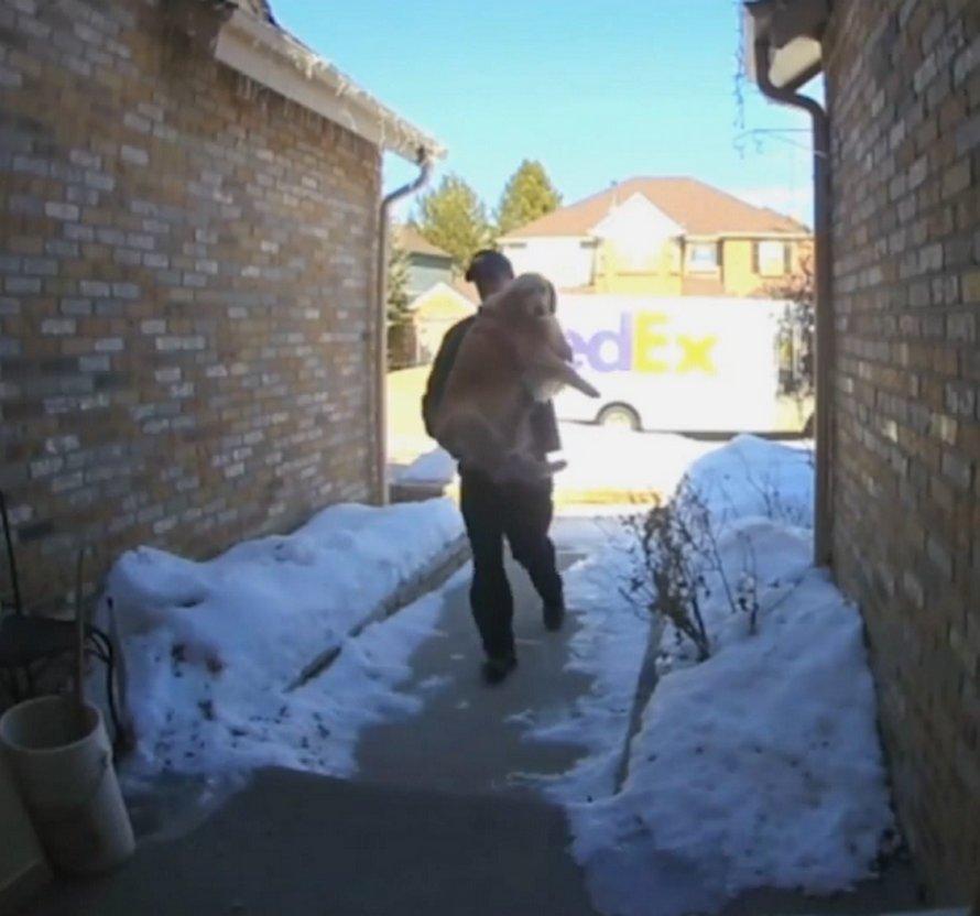 Cette vidéo de surveillance montre le moment adorable où un livreur FedEx livre une chienne perdue à sa famille après son évasion