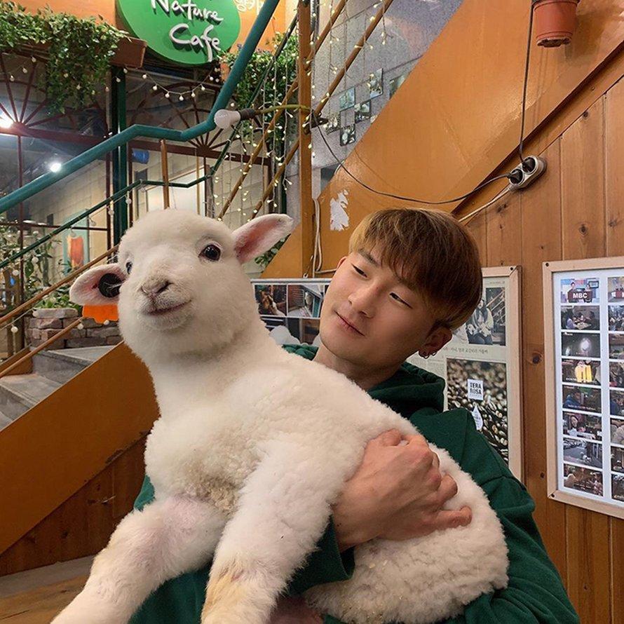 Ce café de moutons en Corée a partagé des photos virales d'un mouton qui se fait laver