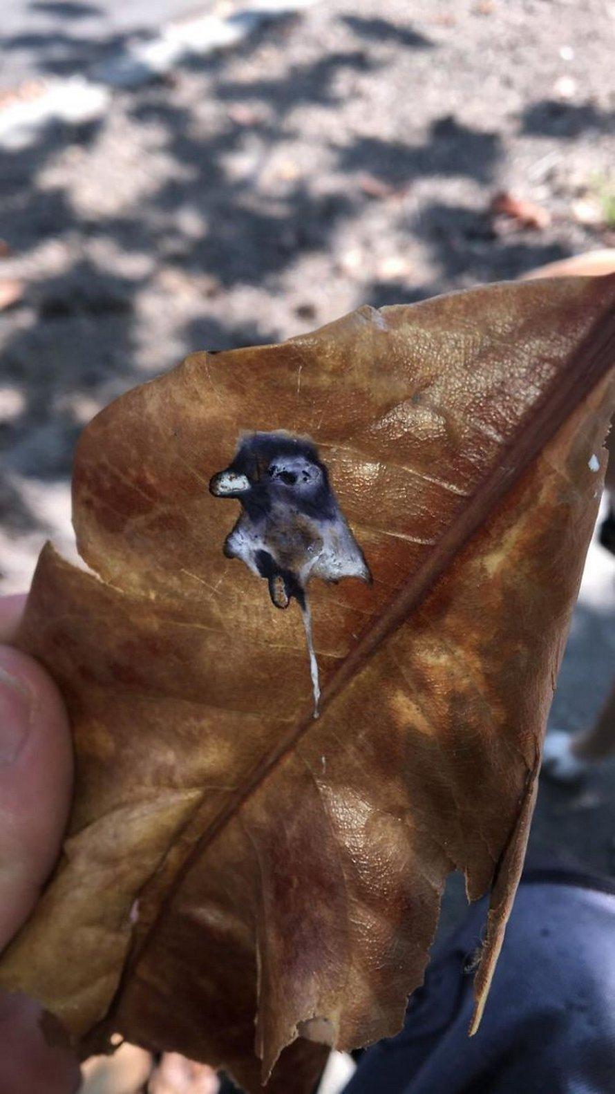 24 fois où des gens ont vu des paréidolies et les ont immortalisées pour que tout le monde puisse les voir (nouvelles images)