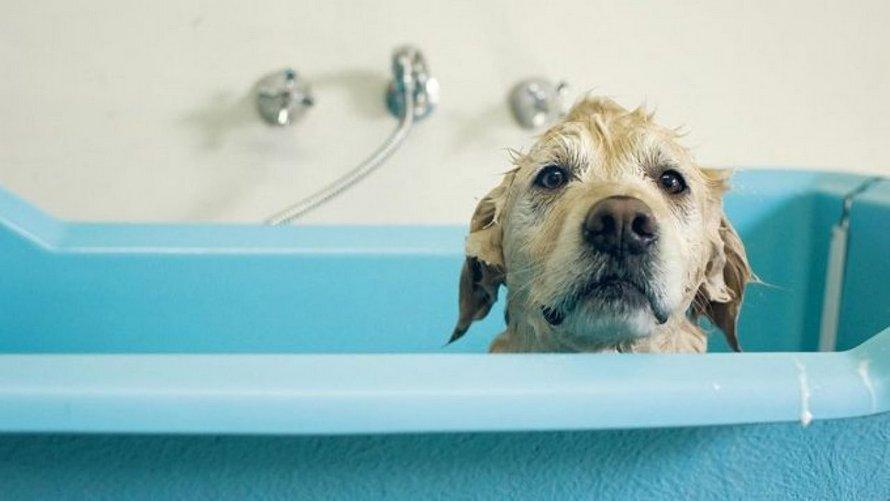 Des vétérinaires avertissent les gens de ne pas laver leurs animaux avec des produits corrosifs pour se protéger du coronavirus