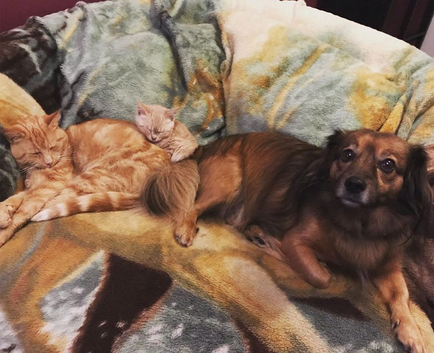 Ce chat est atteint d'une maladie rare qui fait en sorte qu'il sera toujours de la taille d'un chaton