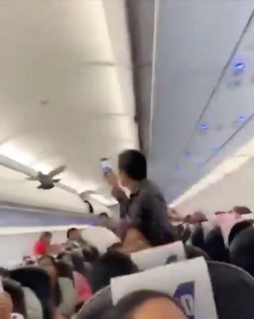 Un pigeon clandestin a semé la panique après être resté coincé dans un avion
