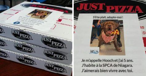 Cette pizzeria aide les chiens d'un refuge local à se faire adopter en affichant leurs photos sur des boîtes à pizza