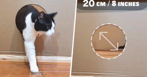 Des gens ne cessent de réduire la taille d'un trou pour voir quand leur chat arrêtera enfin de le traverser