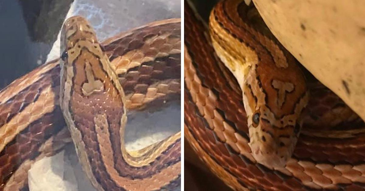 Une maman de Caroline du Sud a nommé son serpent «Tête de b*te» à cause d'une marque unique sur sa peau