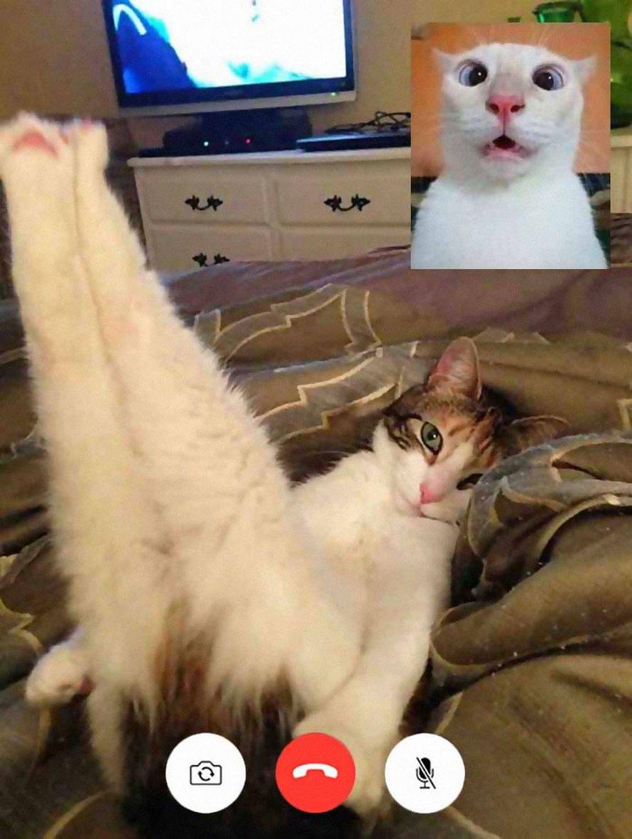 Des gens partagent des photos drôles d'appels vidéo de chats qui ont l'air coquins et voici les 7 meilleures ! By IPNOZE.com Appels-video-chats-droles-005