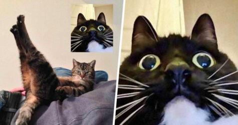 Des gens partagent des photos drôles d'appels vidéo de chats qui ont l'air coquins et voici les 7 meilleures