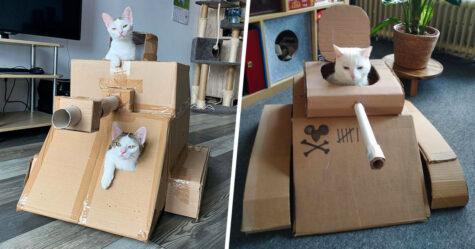 Les gens s'ennuient tellement pendant le confinement qu'ils construisent des chars d'assaut en carton pour leurs chats et voici les 30 meilleurs