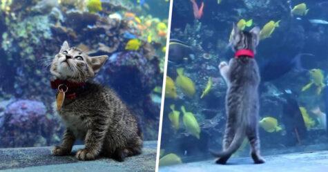 Des chatons secourus visitent un aquarium fermé pour rencontrer les poissons pendant le confinement