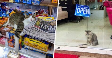 Des gens partagent des photos de chats dans de petits magasins, et on dirait qu'ils sont les patrons