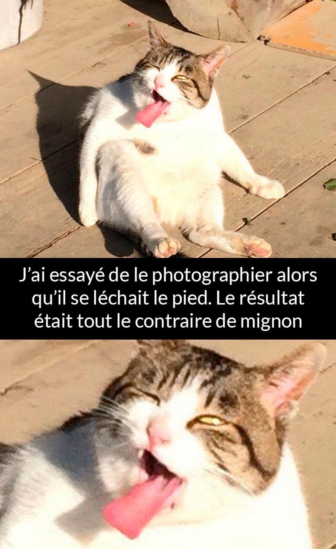 22 photos de chats avec des commentaires rigolos qui vont te mettre un sourire sur le visage