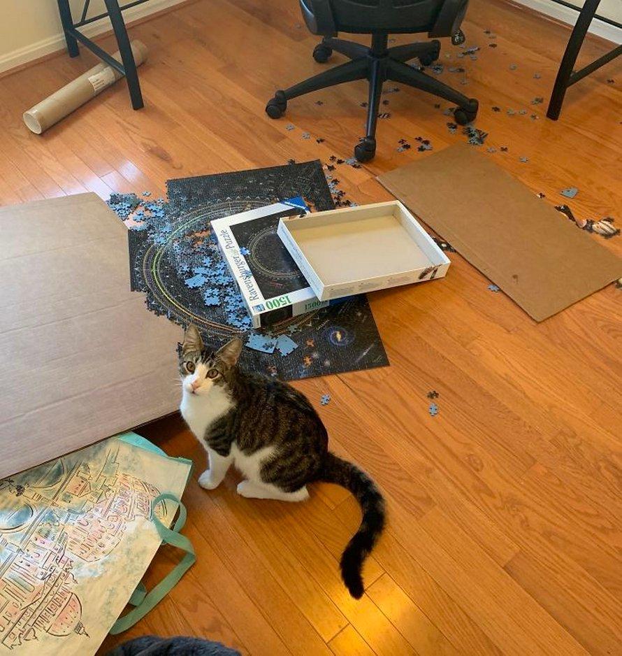 Ces photos montrent ce qui arrive quand tu essaies de compléter un puzzle avec ton chat