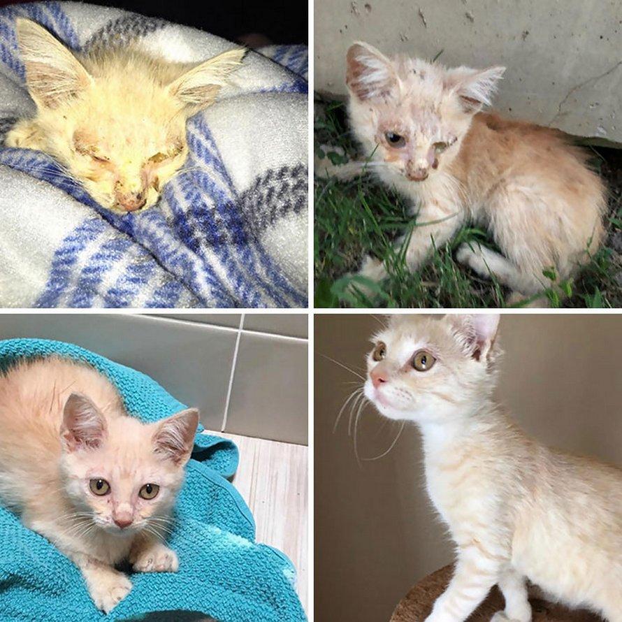 Des gens partagent des photos avant et après l'adoption de leurs chats et voici 22 clichés les plus attendrissants