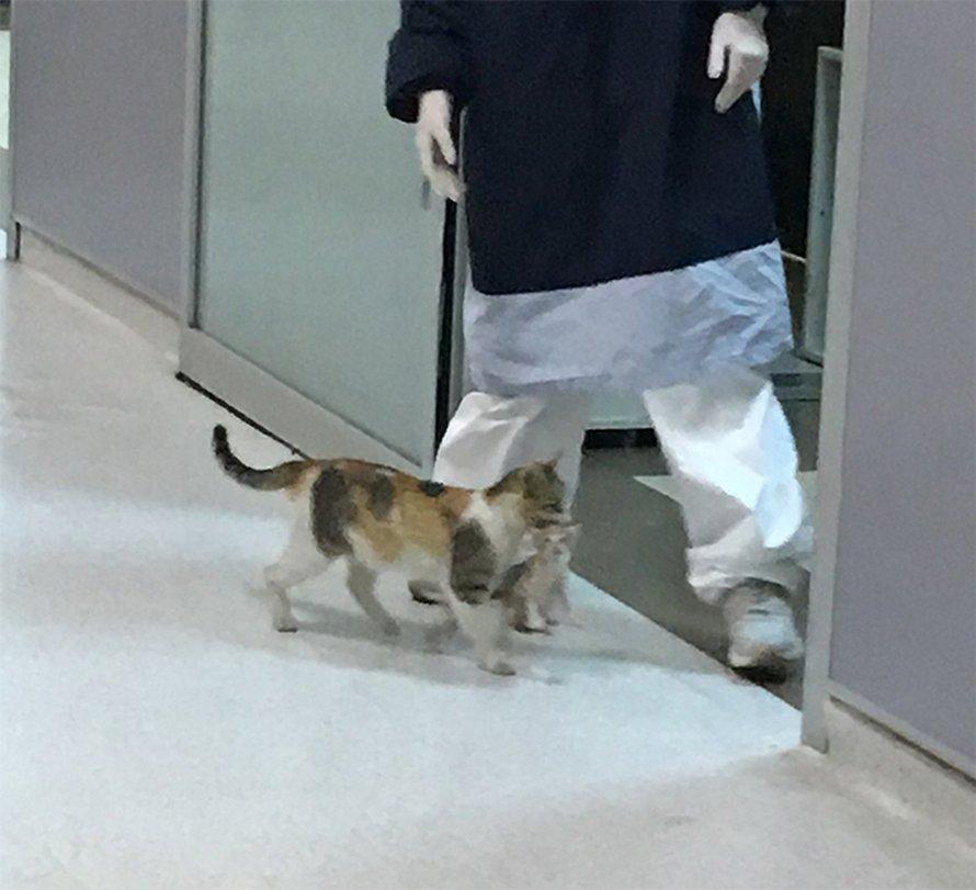 Une maman chatte emmène son chaton malade à l'hôpital et des médecins se précipitent pour les aider