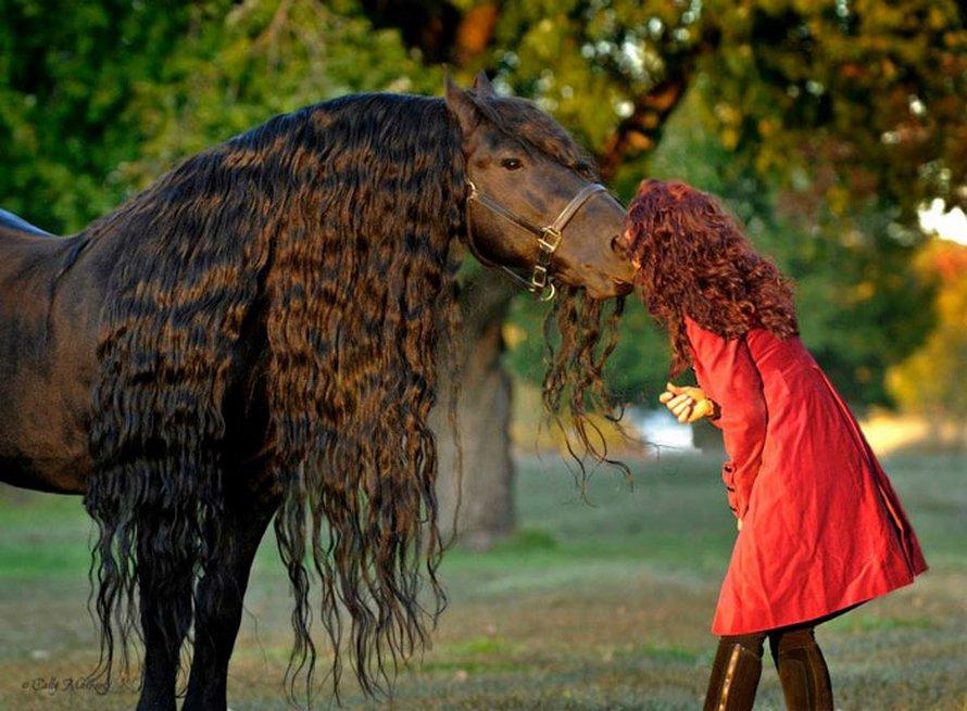 Ce cheval est considéré par plusieurs comme étant le plus bel étalon du monde et voici les 22 plus belles photos de lui