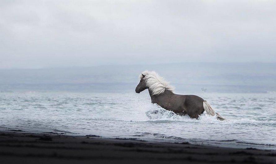 Cette photographe capture des chevaux dans des paysages d'Islande à couper le souffle et voici ses 30 plus beaux clichés