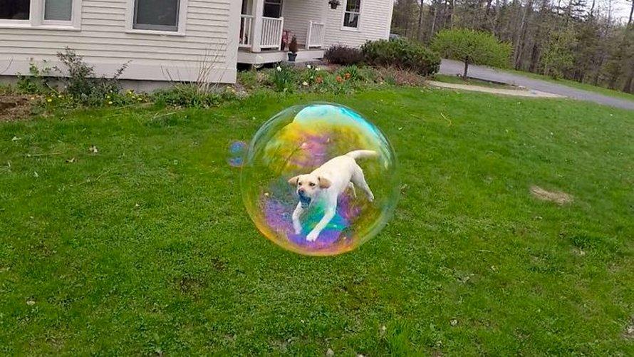 Les gens ont beaucoup de mal à comprendre cette photo de chien