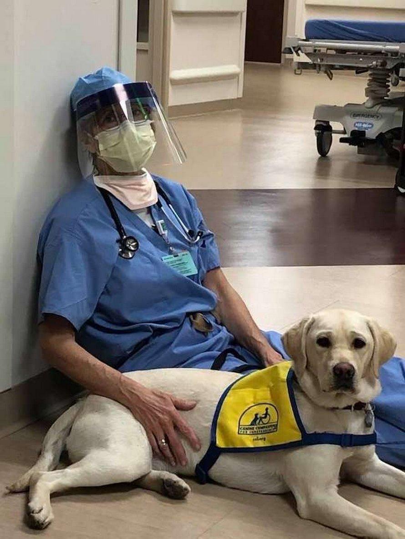 Cette chienne d'assistance réconforte le personnel soignant qui en a le plus besoin dans cet hôpital