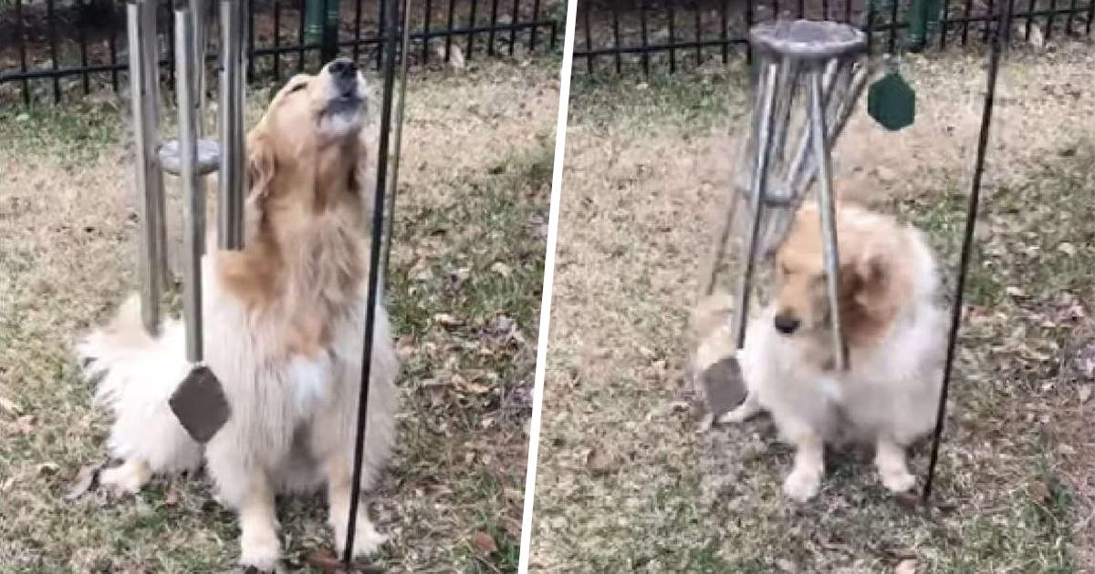 Cette chienne joue du carillon éolien tous les jours pour qu'elle puisse chanter