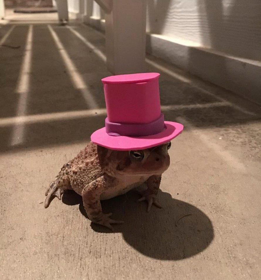 Ce crapaud n'arrêtait pas de revenir sur le perron de cet homme, alors il a commencé à lui fabriquer de petits chapeaux