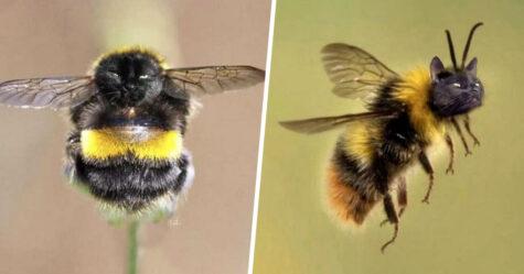 Des personnes passent le temps en photoshopant le visage de leur chat sur des abeilles et ces 12 montages vont te faire rire