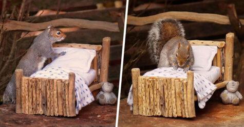 Une femme fabrique un petit lit pour les écureuils dans son jardin