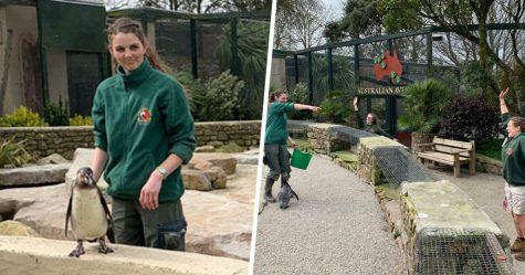 Des gardiennes de zoo se sont confinées dans un parc animalier pendant 3 mois pour prendre soin des animaux