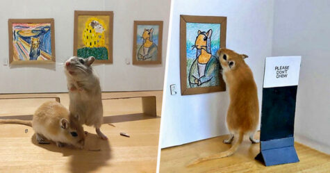 Un couple en confinement a créé une galerie d'art miniature pour leurs gerbilles avec des tableaux emblématiques