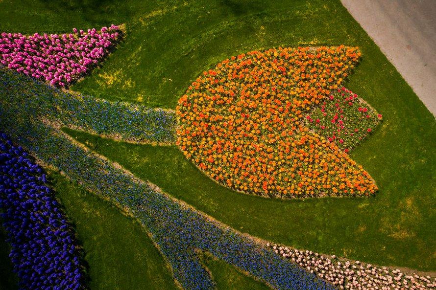 Le plus beau jardin de fleurs du monde n'a pas de visiteurs pour la première fois en 71 ans et voici 31 photos à couper le souffle du jardin