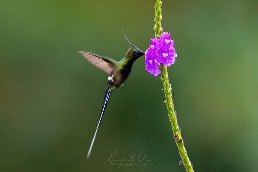 Ce photographe a visité le Pérou et voici les 31 plus beaux oiseaux qu'il a trouvés