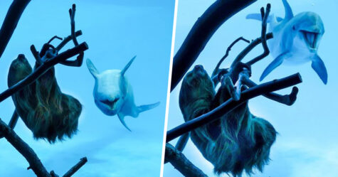 Ces dauphins étaient fous de joie à la vue d'un paresseux à l'aquarium