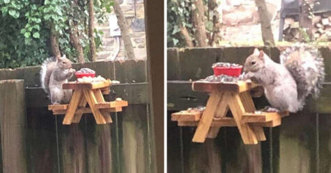 Ce gars a construit une toute petite table de pique-nique pour les écureuils dans sa cour