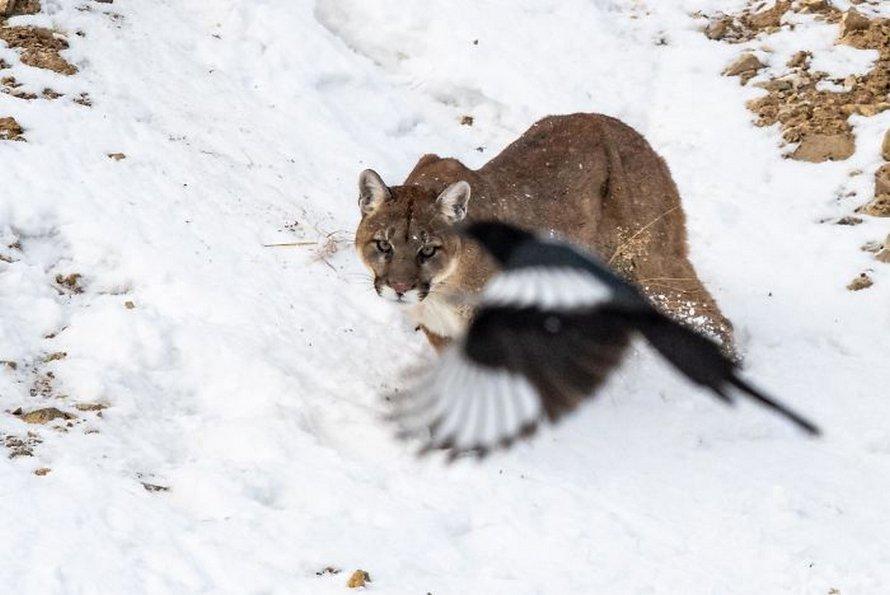 Ce groupe Facebook est dédié aux pires photos d'animaux sauvages qui sont si moches qu'elles sont dôles