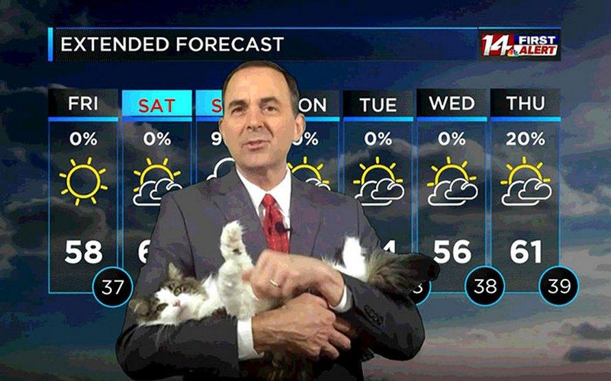 Ce météorologue a commencé à travailler à la maison et est devenu viral quand sa chatte a rejoint son émission