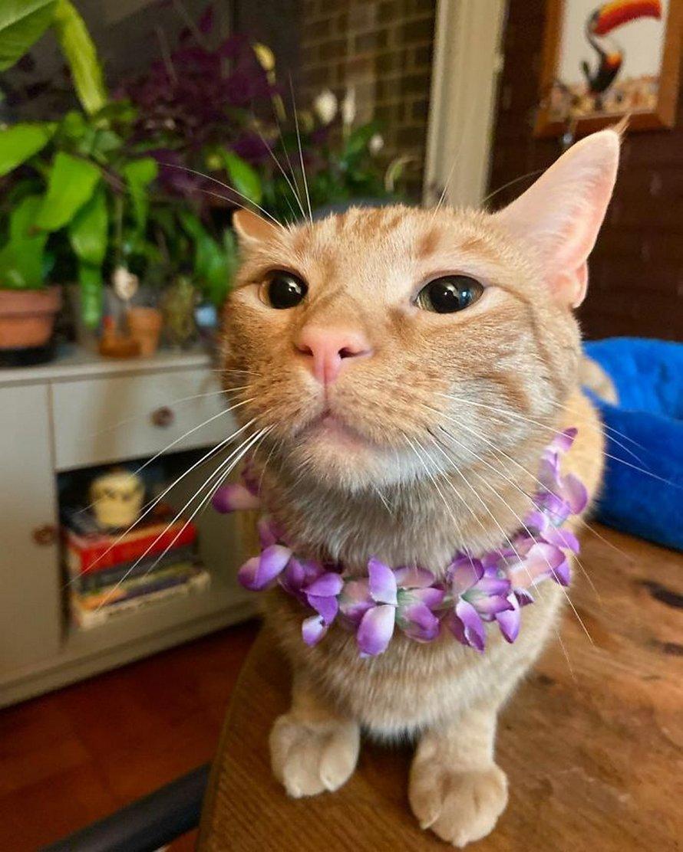Voici Carotte, le chat qui est devenu viral parce qu'il rend ses propriétaires anxieux