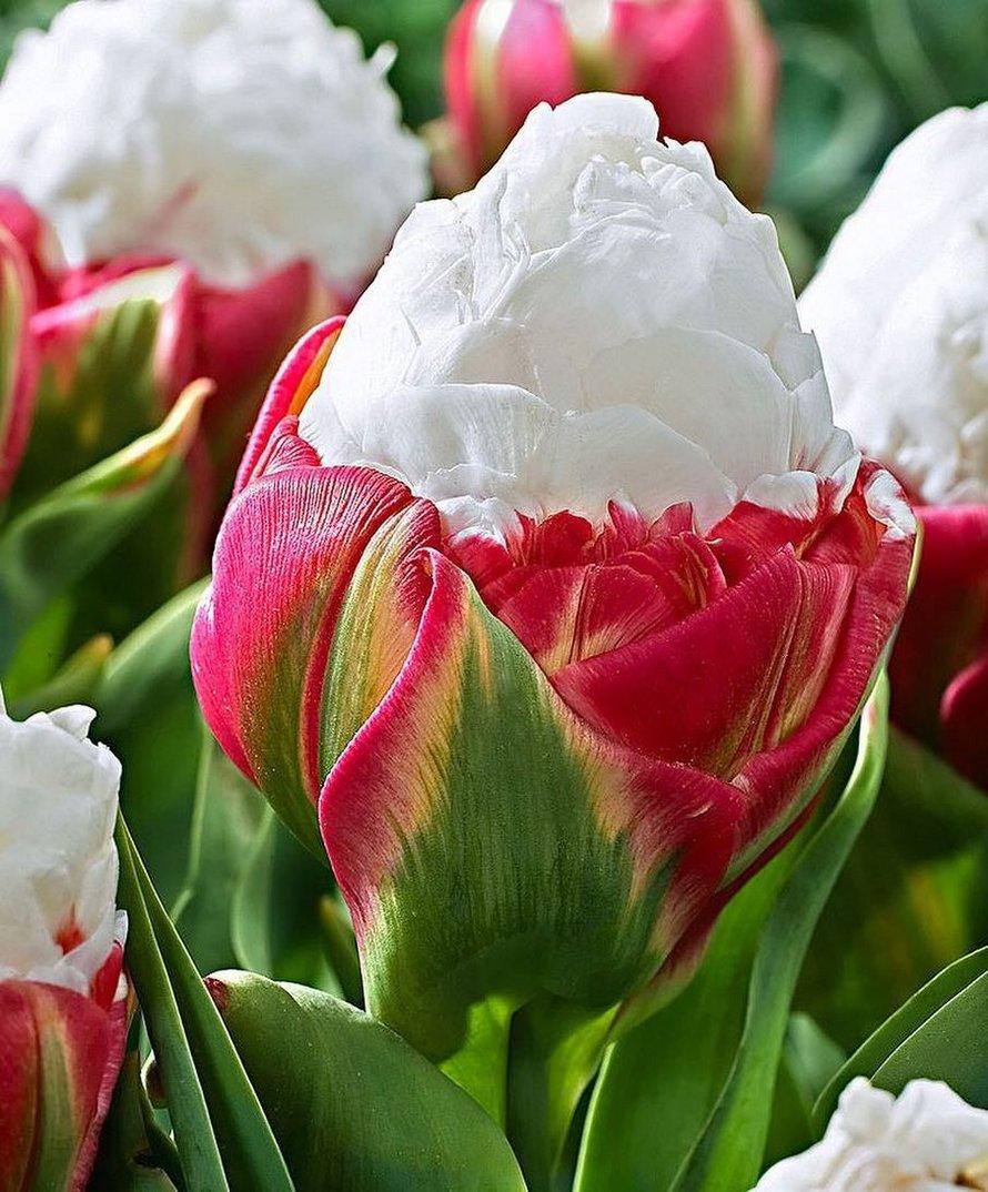 Les tulipes de crème glacée existent et ces 10 photos vont te donner faim