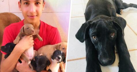 Un ado de 17 ans ouvre un refuge pour animaux unique et il a déjà sauvé 22 chiens et 4 chats