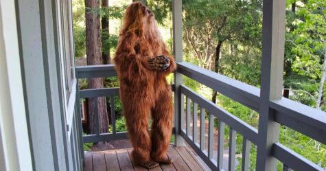 Une personne déguisée en bigfoot a posé pour cette annonce de maison à 999 000$ et les photos sont vraiment drôles