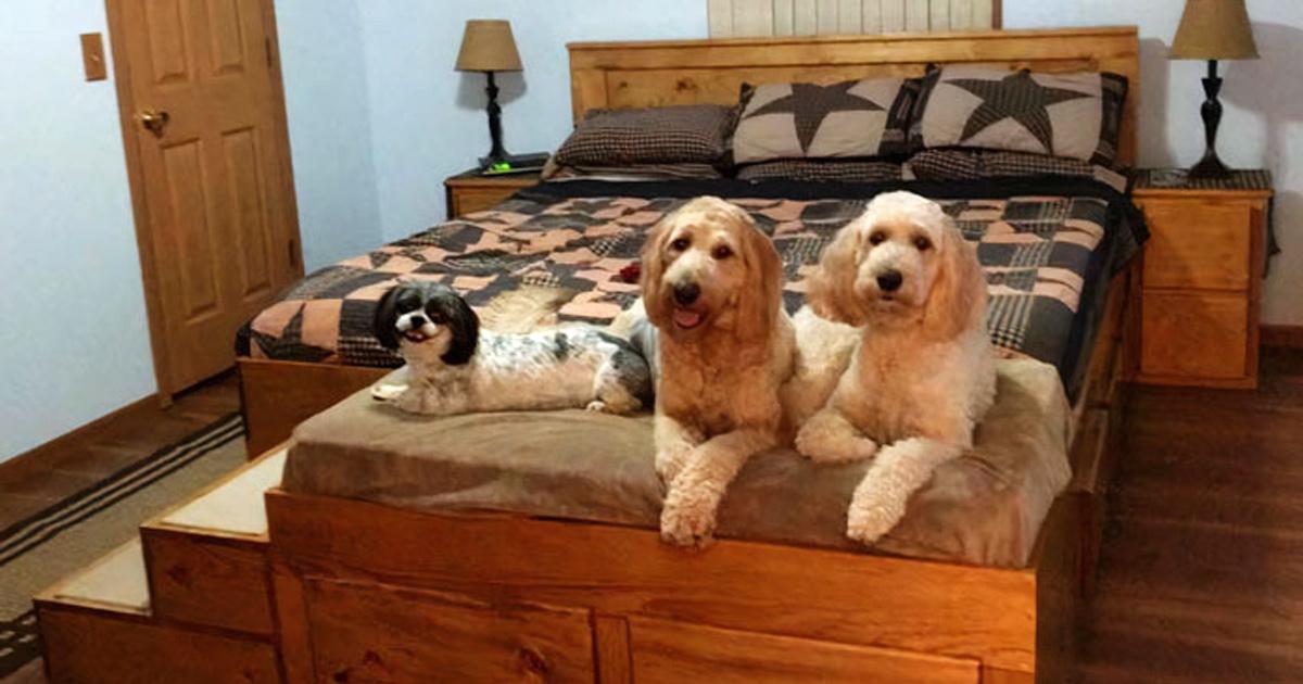 Cette société fabrique des cadres de lit en bois sur mesure avec des lits pour animaux de compagnie intégrés