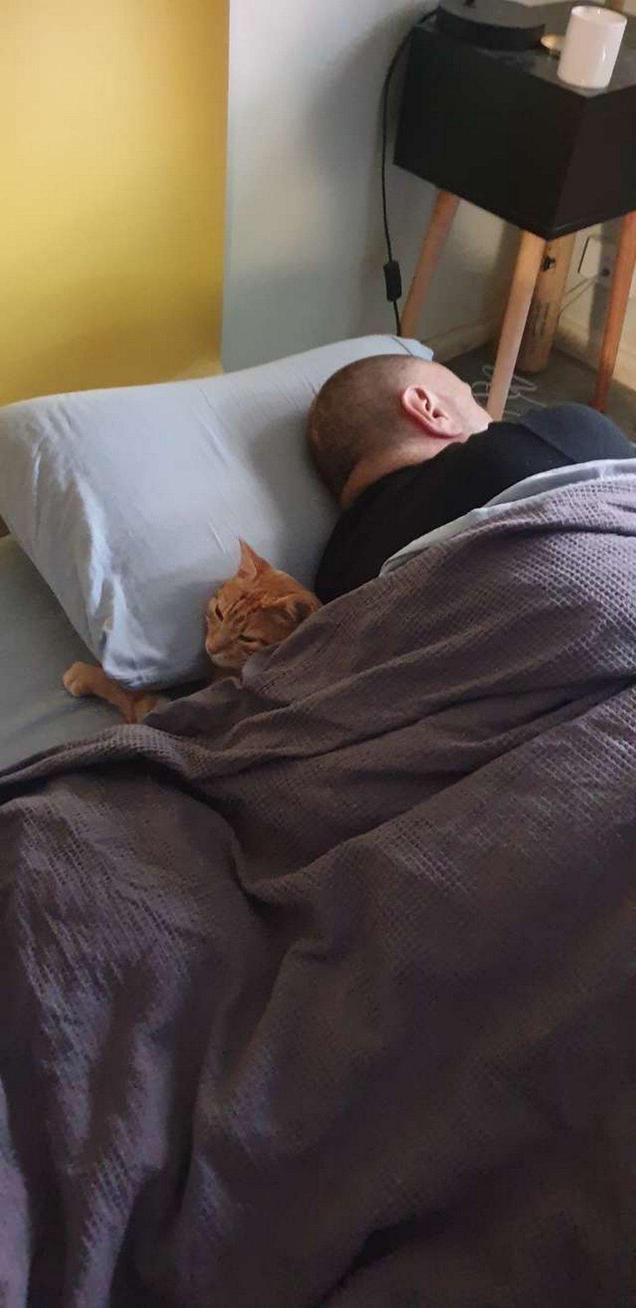 Un chat se faufile dans la maison de ses voisins chaque soir pour dormir avec eux