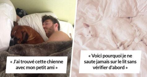Des animaux sournois ont volé la place de leur propriétaire dans le lit et voici 22 moments les plus drôles