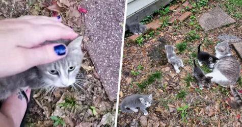 Une chatte errante présente ses bébés à la femme qui la nourrit depuis des mois