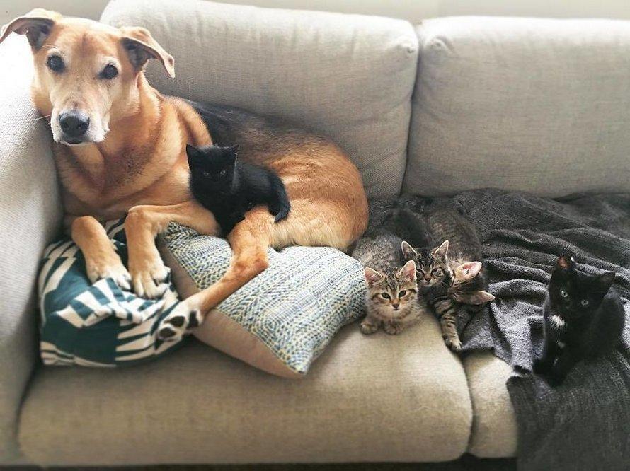 Ce chien prend soin de tous les chatons secourus dans ce refuge pour chats et voici 23 photos qui prouvent que son amour est infini